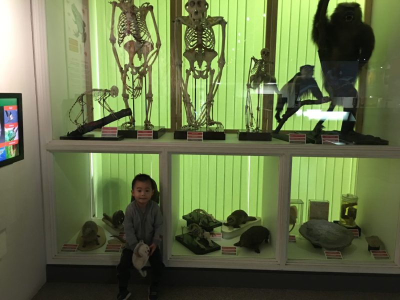 Nature and evolution at National Museum Cardiff