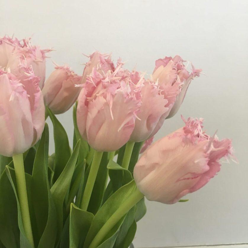 Tulips, Flowers, BlogOnX, Co-op, 365