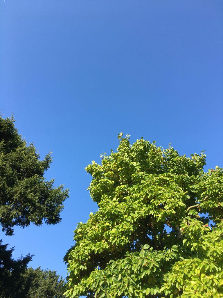 Sky, 365
