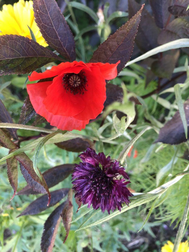 flowers, wildflowers, garden, 365