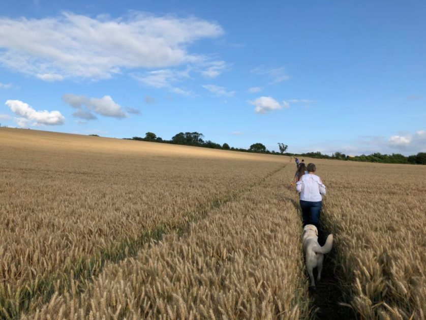 Walk, Hike, Evening walk, Countryside, 365