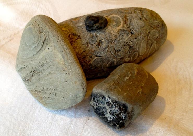 Fossils from Yaverland beach. Copyright Gretta Schifano