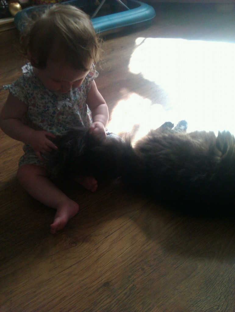 Babies and Pets? 1