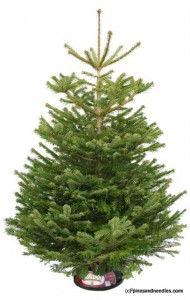 Win a 6ft Real Christmas Tree - Winner Announcement 2