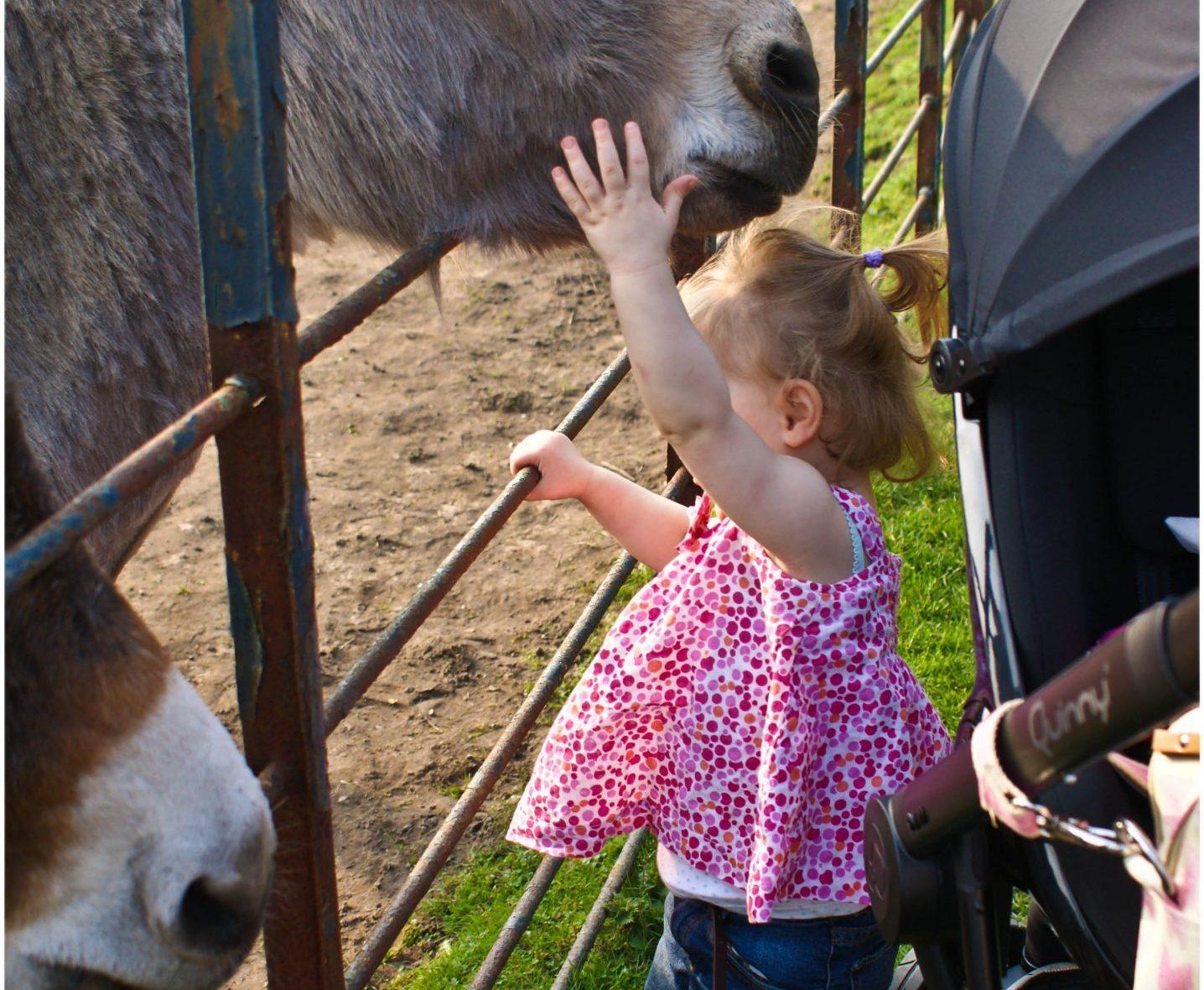 Heaton Park, Heaton Park Donkeys, Heaton Park Animals, Heaton Park Farm, Donkeys,