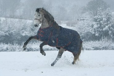 Winter Rugs - How to keep your horse warm in Winter 4