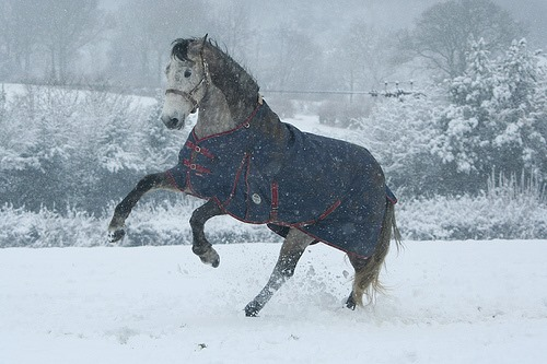 Winter Rugs - How to keep your horse warm in Winter 1