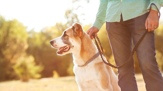 8 things you should know before getting a dog 1