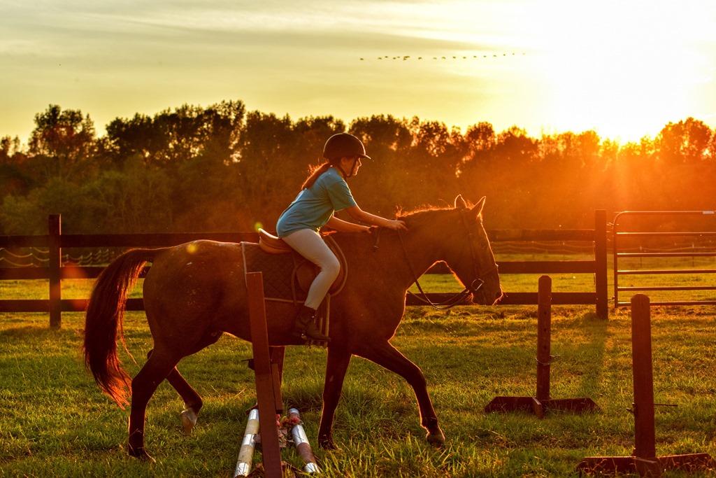 Horses: Brushing Boots 2