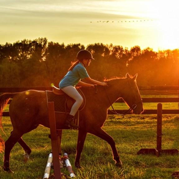 Horses: Brushing Boots 6