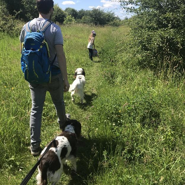 dog walk