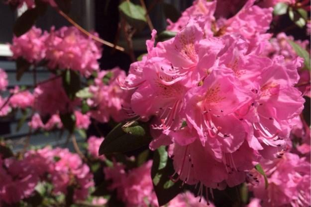 Spring Blossoms 9