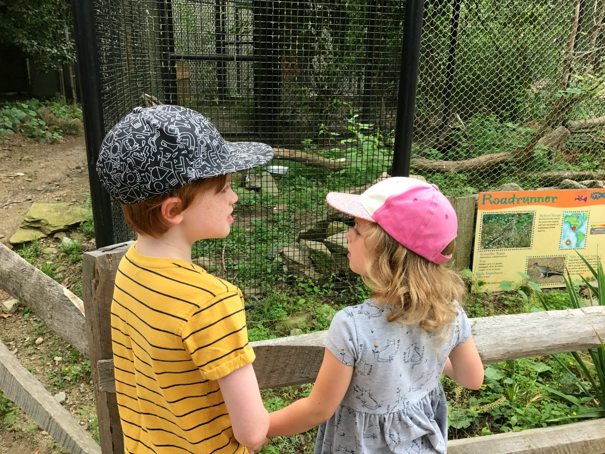Snapshots from the zoo 2