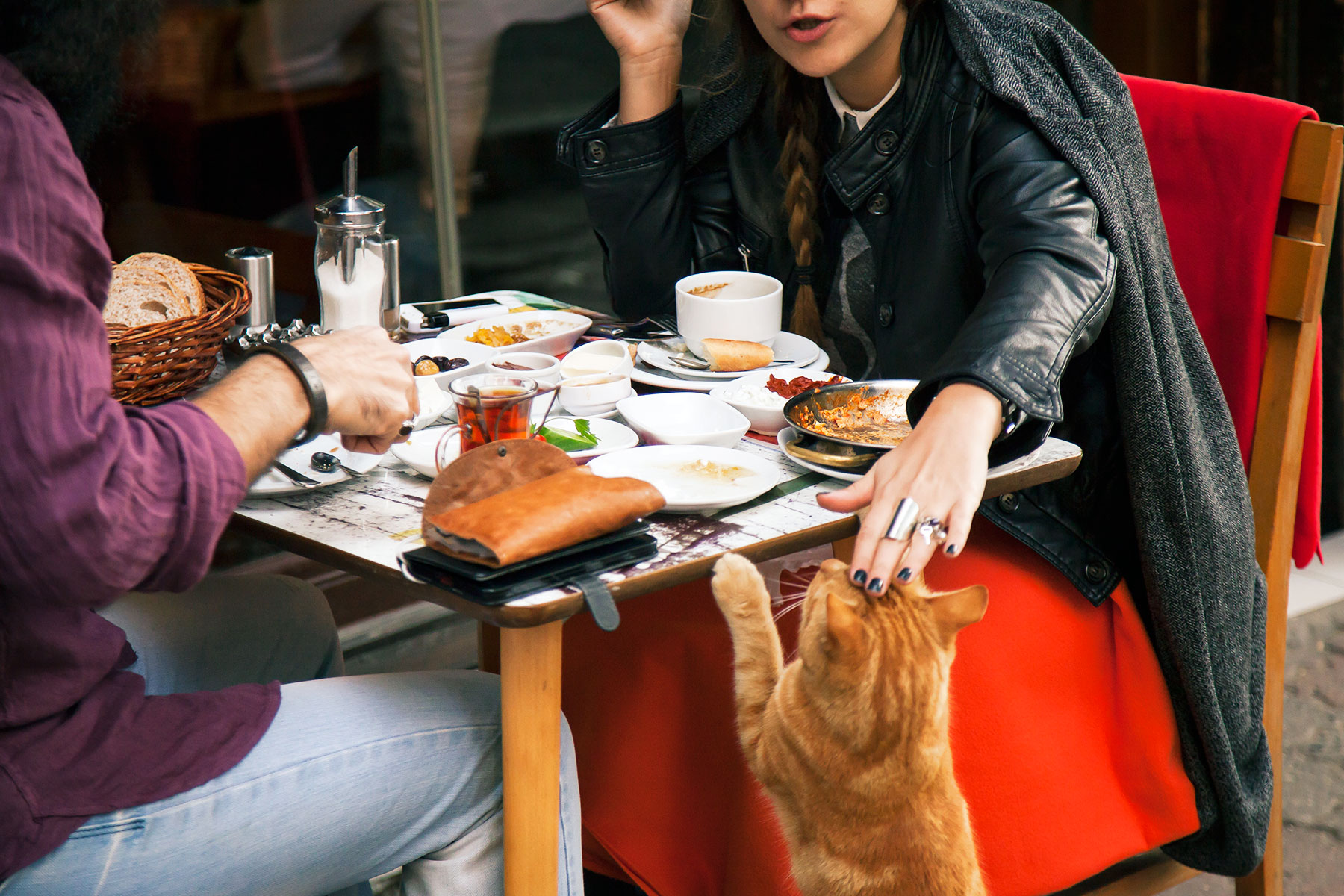 Istanbul-is-known-for-its-many-street-cats-always-looking-for-food
