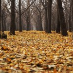 7 Things I Love About Autumn