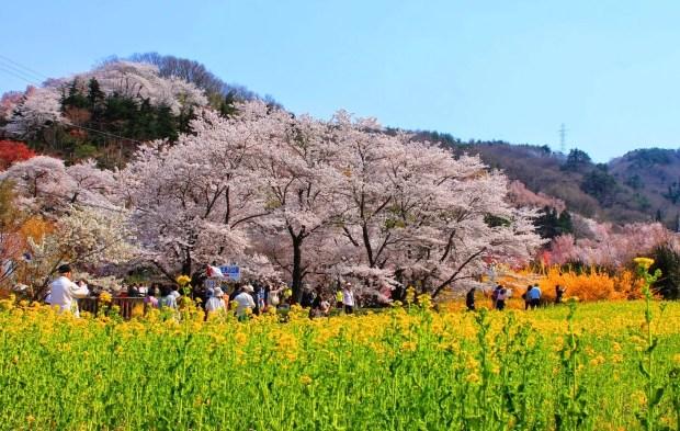 Parque Hanamiyama (Foto: Japan Guide)