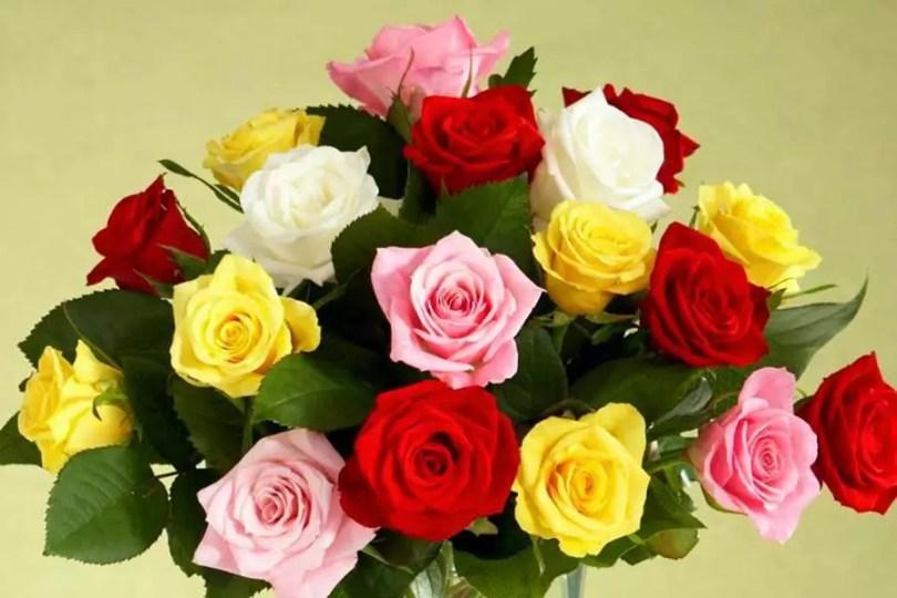 Rosas | ©Proflowers)