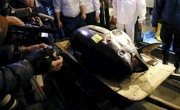 Atum é arrematado por mais de R$ 470 mil no 1º leilão de peixes em Tsukiji (Imagem: Reprodução/YouTube)