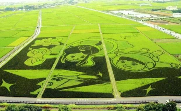 Maior arte em arrozal do mundo (Foto: Distribuição/Guinness World Records)