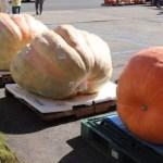 Abóbora de 394 kg vence concurso no Japão