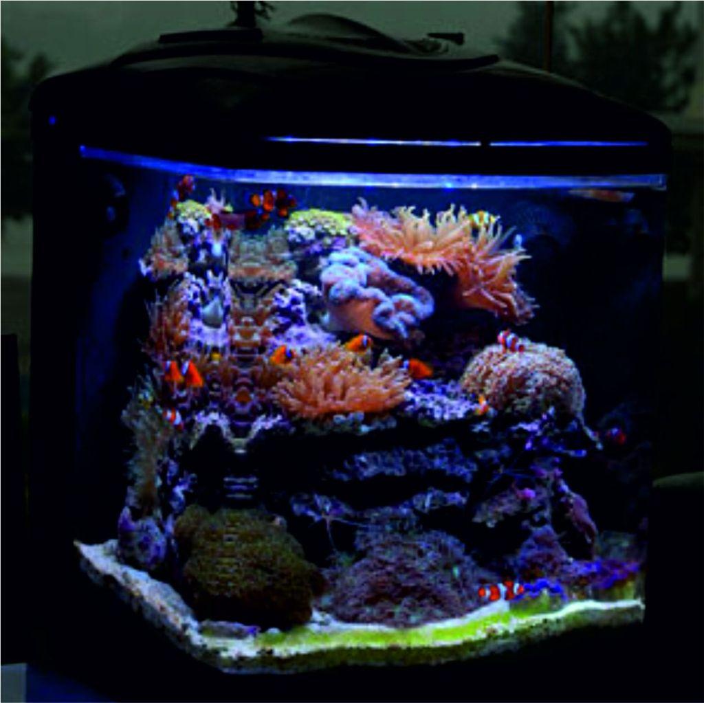 10 mejores peces peque os de agua salada para mini for Mejores peces para acuario