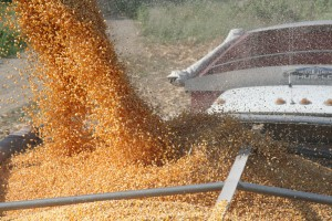 carga-de-maiz-desde-silos-al-camion-de-transporte-con-destino-a-planta-de-alimento-de-cerdos_0