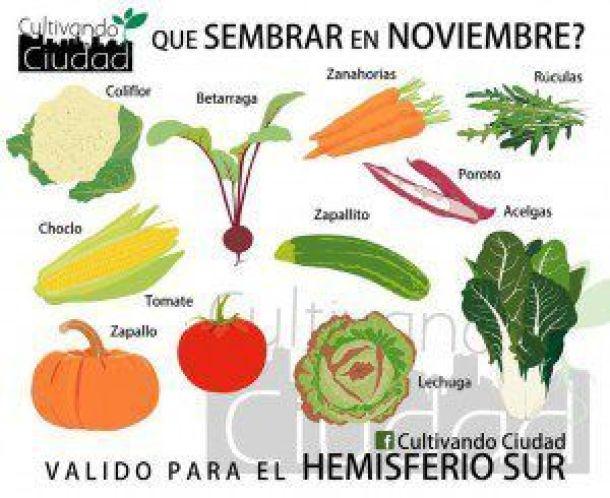 Huerta-en-noviembre