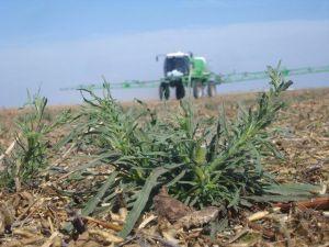 Malezas_resistentes_a_herbicidas_Un_problema_creciente