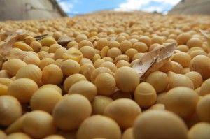 soja grano mundoagrocba 69544gr8799