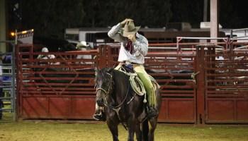 cowboy, rodeo, horse