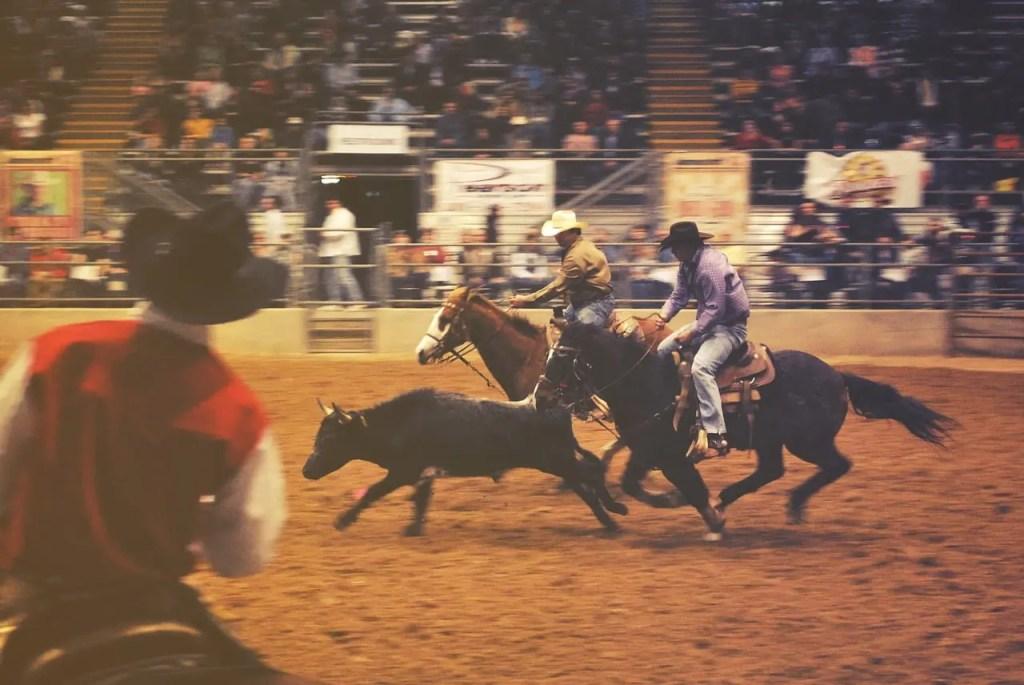 rodeo, horses, cowboys
