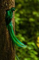 El Quetzal, foto por Alan Lacayo Odraudes
