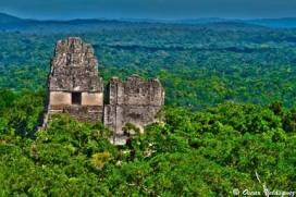Tikal Oscar Velásquez por medio de petenguatemala01 - Fotos de Construcciones de los Mayas y sus Descendientes