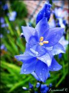 Flor foto por Enmanuel Ramirez - Galería - Fotos de Flores