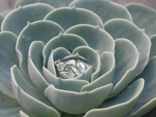 Fotografía de Carlos Otoniel Herrera Pérez. e1360010603635 - Galería - Fotos de Flores