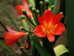 Fotografía de Estuardo Ramazzini 1. e1360012720992 - Galería - Fotos de Flores