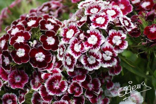 Fotografía de Oscar Sierra 3. - Galería - Fotos de Flores