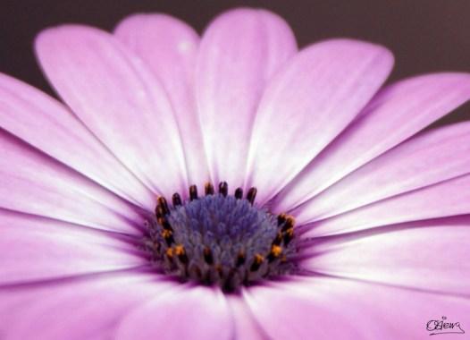 Fotografía de Oscar Sierra. e1360012685714 - Galería - Fotos de Flores