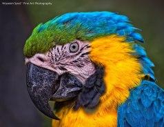 Guacamaya foto por Waseem Syed - Galeria - Fotos de Guatemala por Waseem Syed