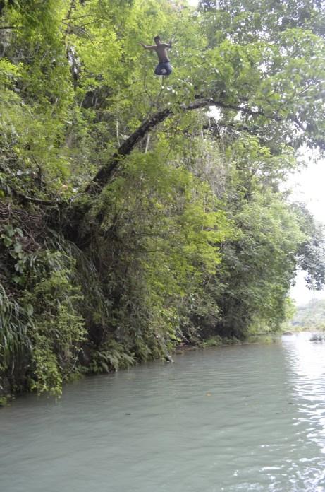 Saltos en Semuc Champey desde los árboles - Guía Turística - Semúc Champey, Alta Verapaz
