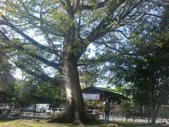op16c - Guía Turística – Mapa en Relieve de Guatemala