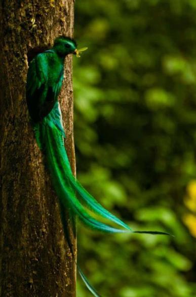 El Quetzal foto por Alan Lacayo Odraudes - Guía Turística - Ranchitos del Quetzal