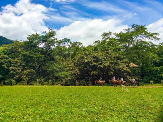 caballos Mynor Molina - Guía Turística - Hun Nal Ye