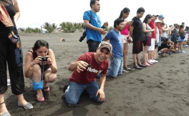 liberacion de tortugas 6 - Guía Turística - Liberación de Tortugas