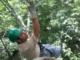 Canopy Tour en las afueras del parque Tikal, disfruta de volar entra las copas de los arboles