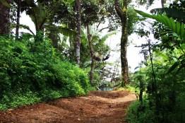 2 - Guía Turística - Green Rush