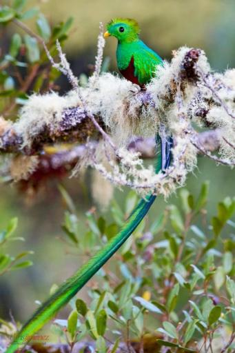 El Quetzal 3 foto por Chris Jimenez Photography - Poema - Kukulkan Gukumatz