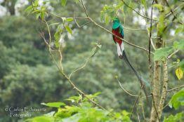 El Quetzal en San Marcos foto por Carlos Echeverria - Fotos de Guatemala por Carlos Echeverría