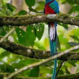El Quetzal - 3 foto por Luis Búrbano