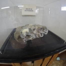 Uno de los ejemplares mas grandes dentro del Museo